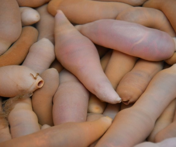 mi a legjobb a pénisz elkészítéséhez)