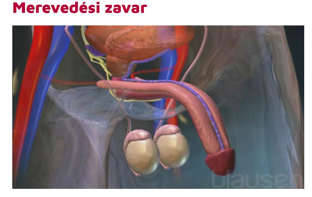 a pénisz megnagyobbodása a szteroidoktól)