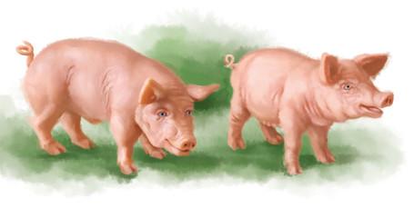 a pénisz porc ill)