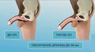 a pénisz lehajolt)
