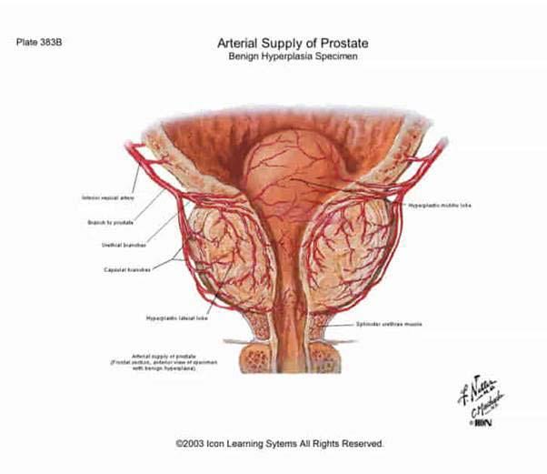 a pénisz nyálkahártyájának helyreállítása)