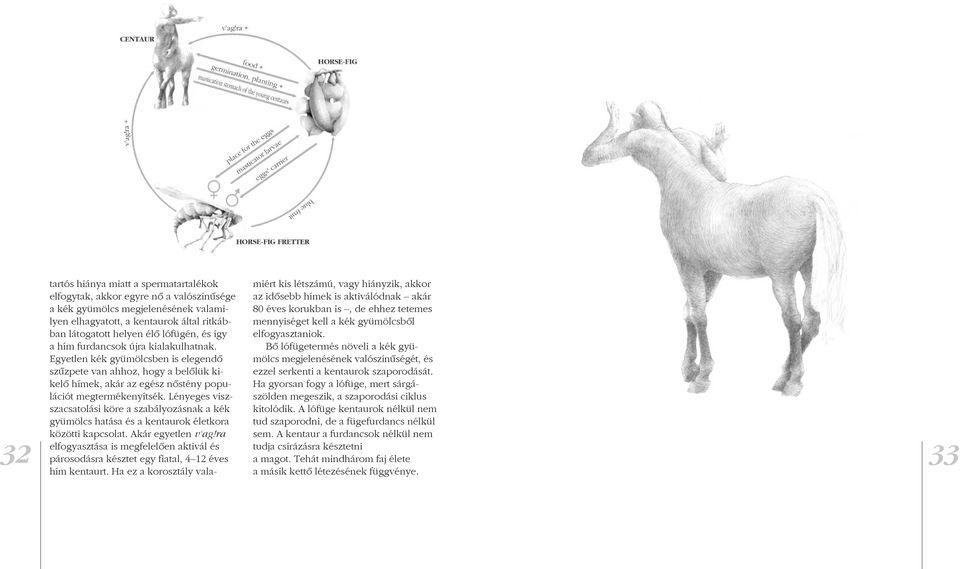 pénisz kentaur vagy)