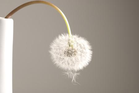 milyen növény egy erekcióhoz