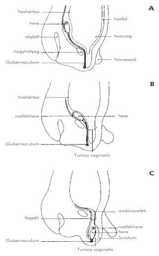 gyógyszer hogyan emelje fel az erekciót