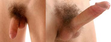 erekció során a pénisz megnő