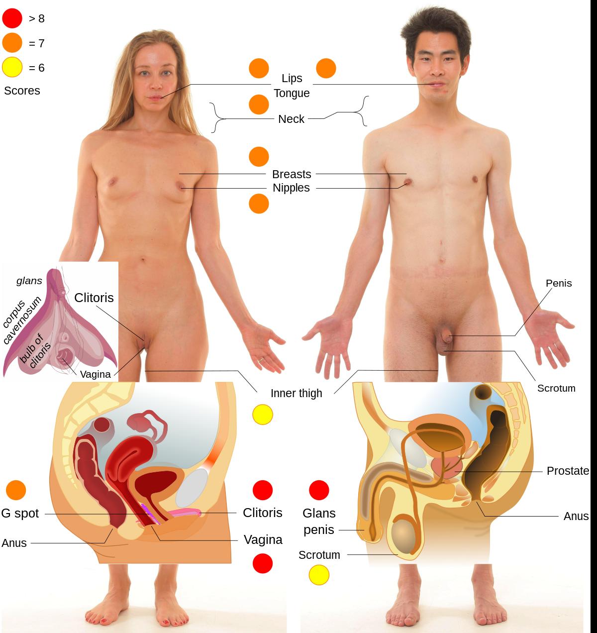 erogén zónák az erekcióhoz