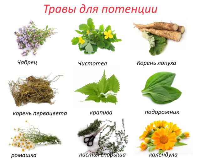 méhcsípés a péniszben)