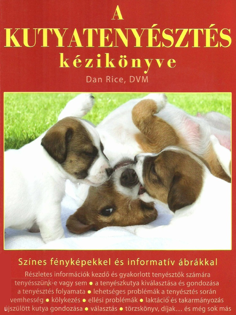 Kisállatorvos - Kutyák leggyakoribb neurológiai betegségei