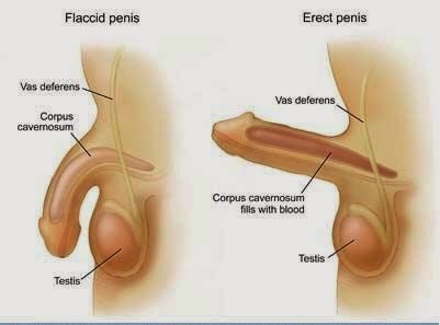 mesterséges pénisz