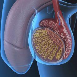 prosztatagyulladás hiányzik az erekció)