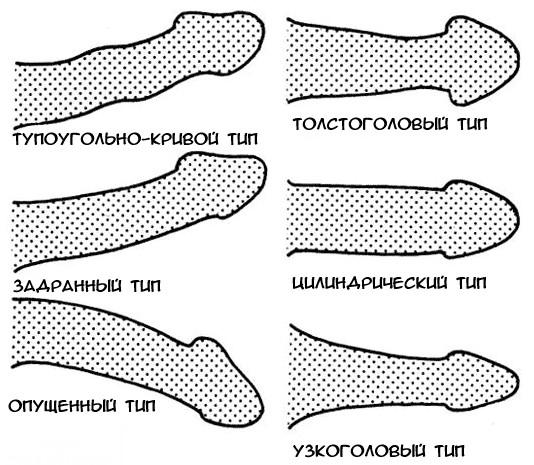 fajta pénisz hossza)