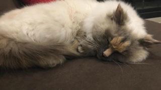 egy pénisz két cicáért