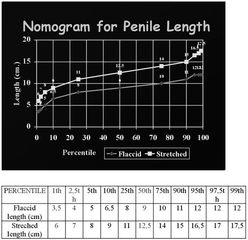 pénisz hossza szélesség
