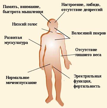 Dr. Szabó Orvosi centrum – Péniszvastagítás