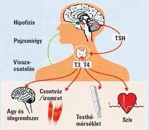 a pénisz megnagyobbodása hormonális gyógyszerekkel