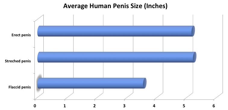 A súly befolyásolja a pénisz méretét?)
