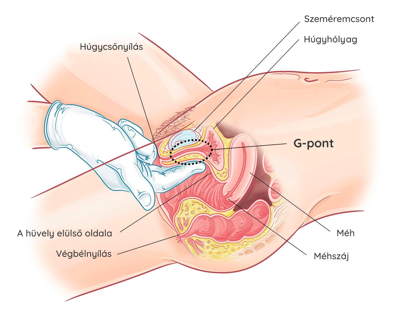 fotó női erekció