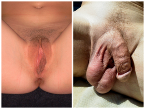 pubertás pénisz)