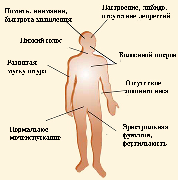 a pénisz görbületének okai az erekció során