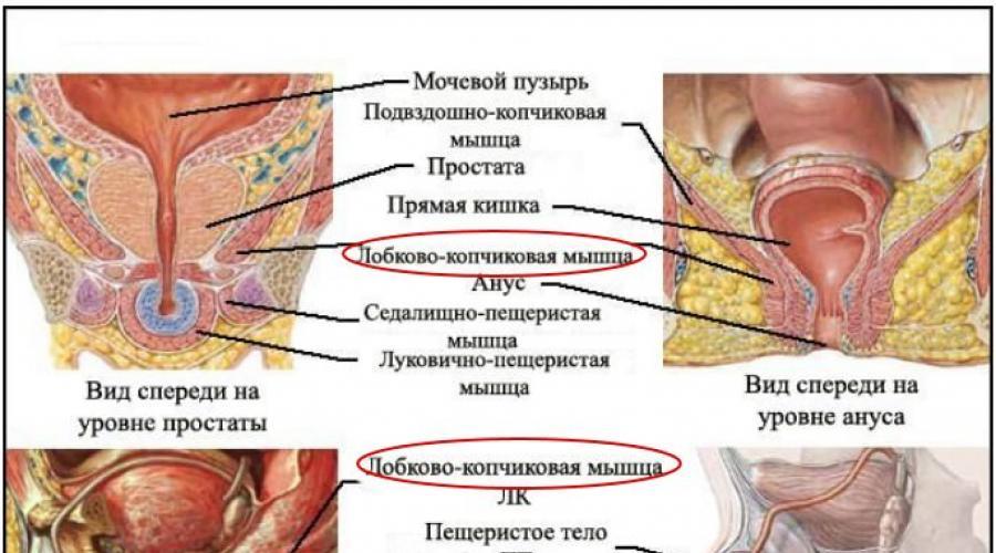 kegel gyakorlatok az erekció javítására