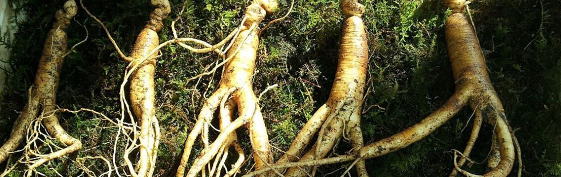 gyógynövények az erekció meghosszabbítására)