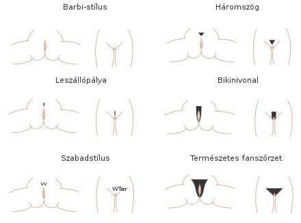 nők a pénisz erekciójáról