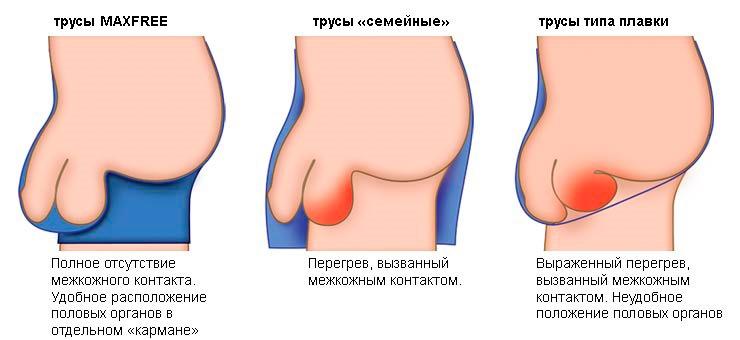 miért van az embernek puha pénisze)